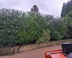Laurel Hedge - Uvedale Road, Oxted - After