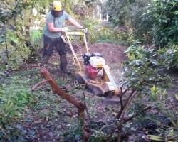 Stump Grinding - Limpsfield 1