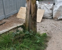 Auckland Road - Caterham - Stump Grinding - Before