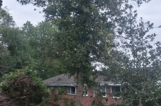 Ivy Clad Holly Tree Fell - Plus Old Shed Removal - Vicarage Hill - Westerham - Before