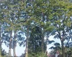 Park View Road - Woldingham - After 2