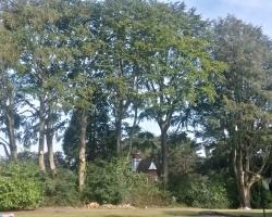 Park View Road - Woldingham - After
