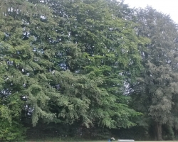 Park View Road - Woldingham - Before 2