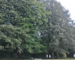 Park View Road - Woldingham - Before 3