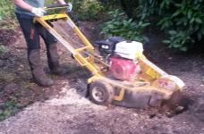 Stump Grinding - Limpsfield 2