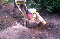 Stump Grinding - Limpsfield 3