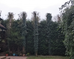 Tree Work - Oxted - After 2