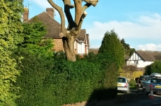 Willow Tree - Hamfield Close, Oxted - After 2