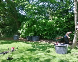 Large Conifers Planting - During 3 - Oxted